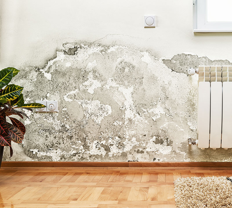 Damp Proofing Poole