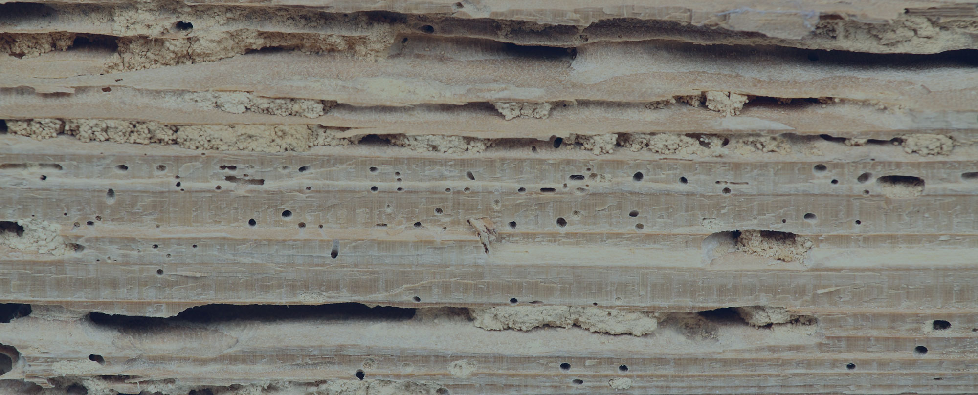 woodworm treatment Bournemouth